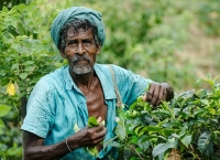 தோட்டத் தொழிலாளர்களுக்கு 1,000 ரூபா சம்பளம் வழங்கப்பட்டது